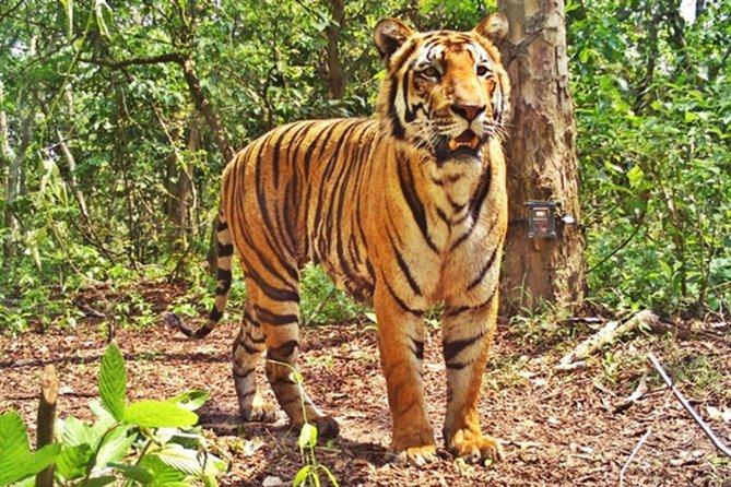 Bandipur Sanctuary Tigers & Elephants