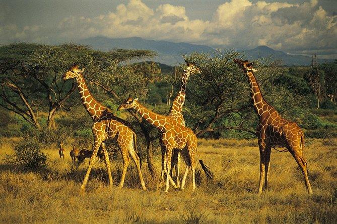 4 days Aberdares National park and Samburu National park