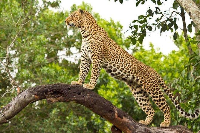 2 Days Masai Mara Safari From Nairobi