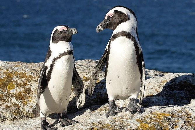 4 Day Cape Town Experience Small Group Tour