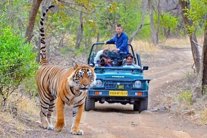 Private Transfer From Jodhpur To Ranthmbore
