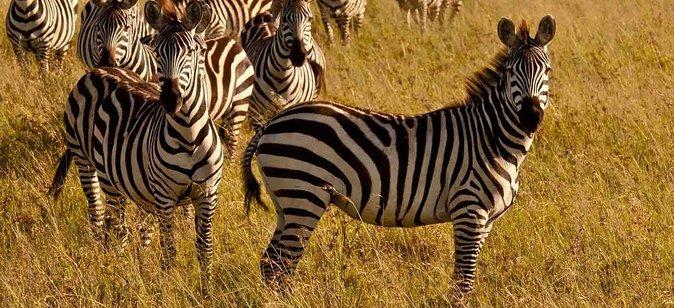 3 Days Amboseli Private Camping Budget Safari