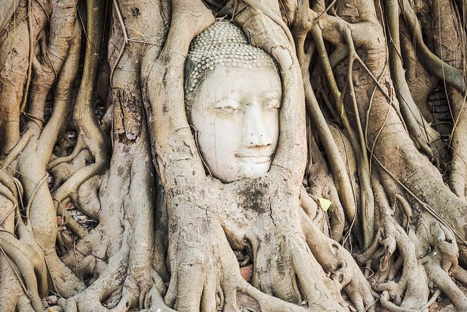 Head of Buddha in the tree roots