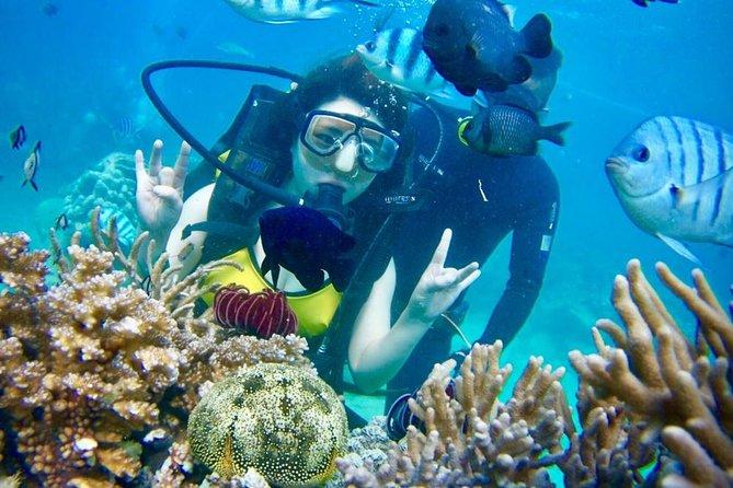 Half Day Private Diving Tour Nha Trang
