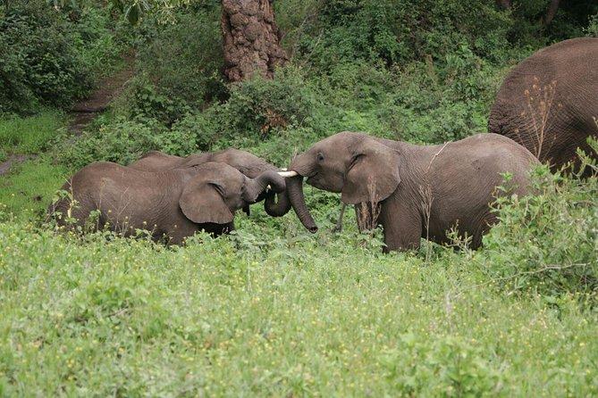 6 Days Serengeti, Ngorongoro & Manyara Budget Camping Safari Tour Tanzania