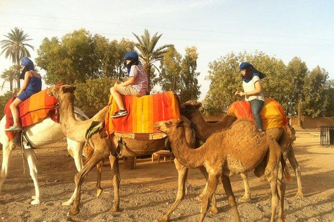 Marrakech Palm Grove Camel ride