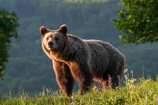Private Brown Bear Watching Tour from Praid