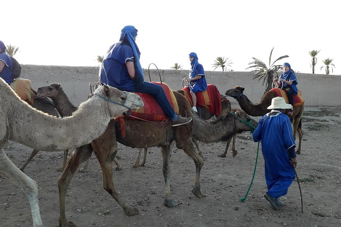 Camel Ride with bedouin & Quad Biking in palm grove
