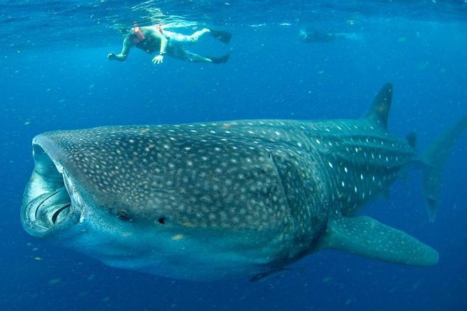 Private Whale shark Ecofriendly tour from Cancun photo 6