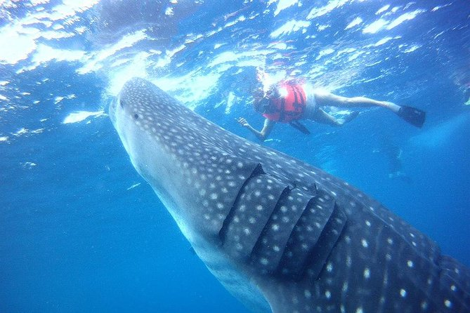 Private Whale shark Ecofriendly tour from Cancun photo 7