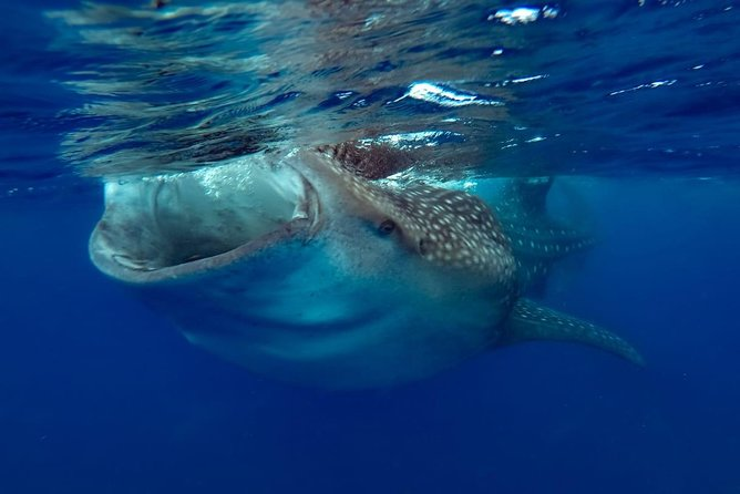 Private Whale shark Ecofriendly tour from Cancun photo 12