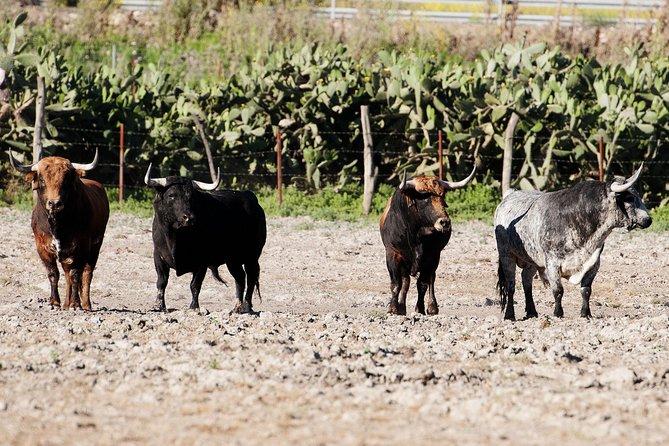 Private Visit to Brave Bull's Ranch & Jerez de la Frontera from Seville