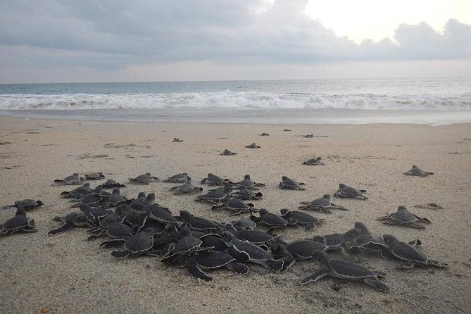 Preserving Baby Sea Turtles And Filling You With Energy In Bioluminescent Lights