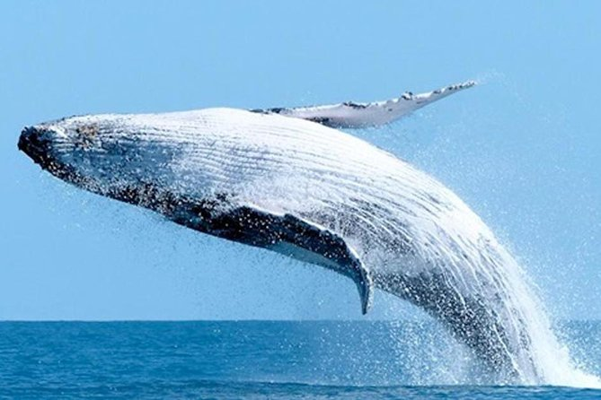Get full day in Samana 3 for 1 Whale Watching-The Lemon Waterfall-Cayo Levantado