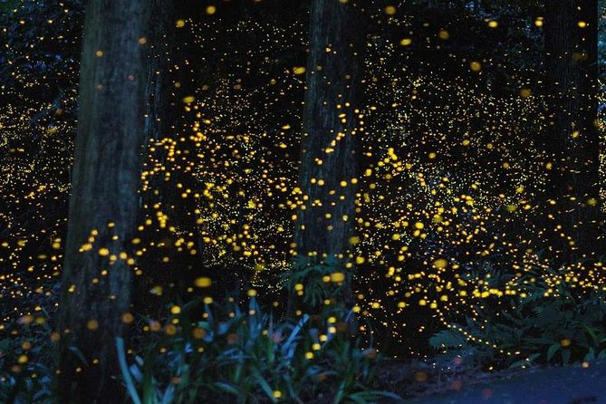 Firefly Watching Tour Package with Dinner - Bohol Philippines