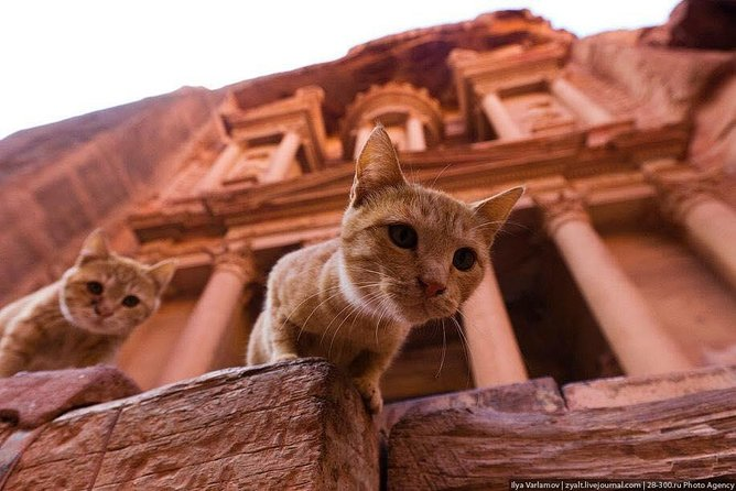 One day Tour and round trip to Petra from QAIA airport and Amman city or Dead Sea