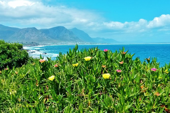 Whale Watching and Wine Tour to Hermanus