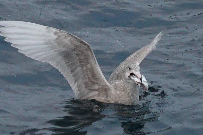 Feeding seagulls exiting and fun