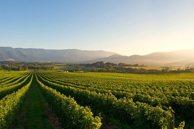 Small-Group Guided Yarra Valley Winery Tour with Wine Tasting
