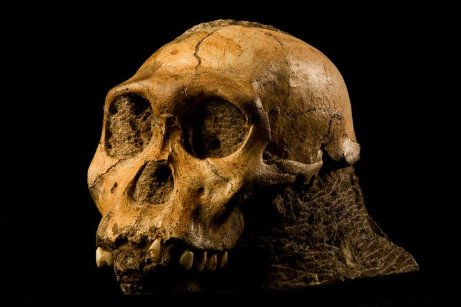 Cradle of Humankind - half Day