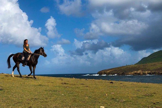 Caribbean Beach Horseback Ride And Swim