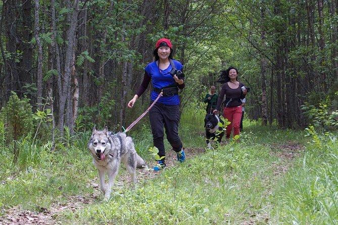 Husky Trekking Tour i Kuhmo