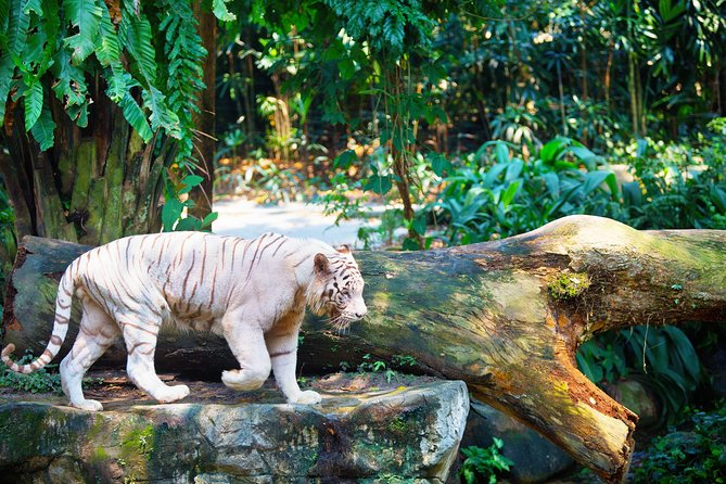 Full - Day Safari Experience - Zoo and River Safari