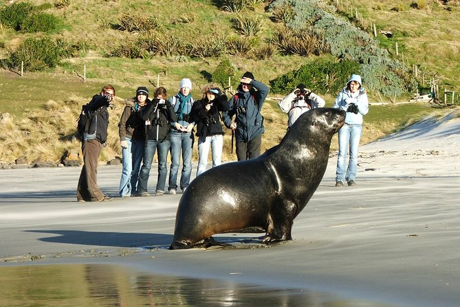 Dunedin Peninsula Wildlife Encounter