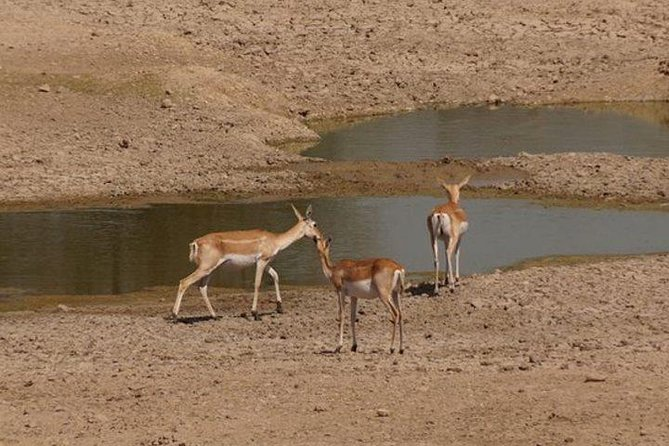 Private Half- Day Bishnoi Village Safari Day Tour In Jodhpur