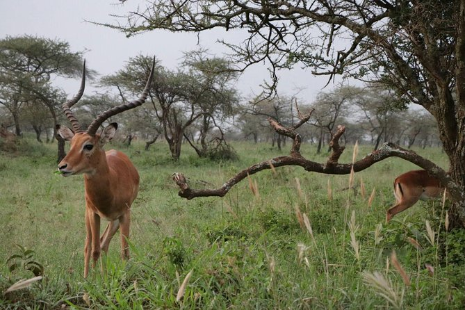 6 Days Tarangire,Serengeti,Ngorongoro &Manyara Budget Lodge Safari Tour Tanzania photo 19