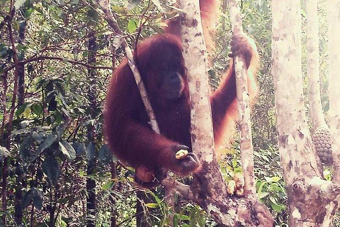 Kuching City Tour & Semenggoh Wildlife