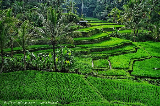 North Bali Trip Full-Day Tour