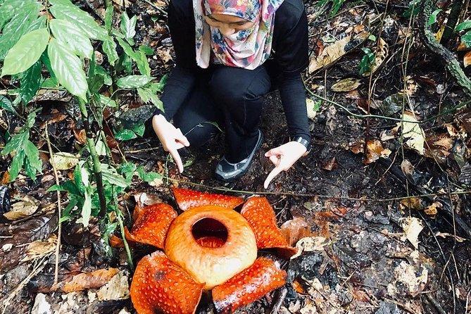 Sarawak Gunung Gading National Park Tour from Kuching