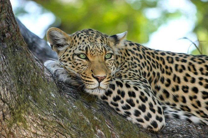 8 Days Tarangire, Serengeti, Ngorongoro & Manyara Mid-range Camping Safari Tour photo 8