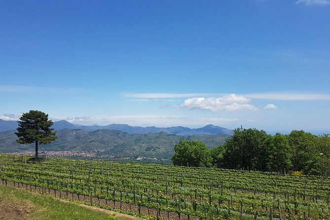 Etna Wine Experience (One-day tour)