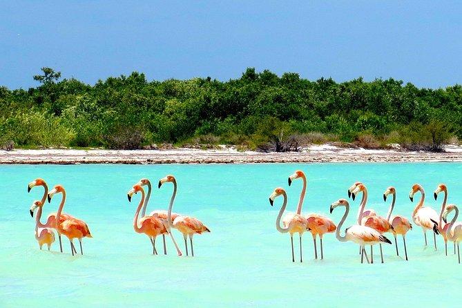 Holbox Island Magic Tour from Cancun