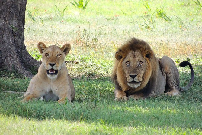 3 Days Tarangire, Manyara & Ngorongoro Mid-range camping Safari Tour Tanzania