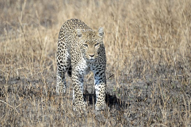 6 Days Tarangire,Serengeti,Ngorongoro &Manyara Budget Lodge Safari Tour Tanzania photo 29