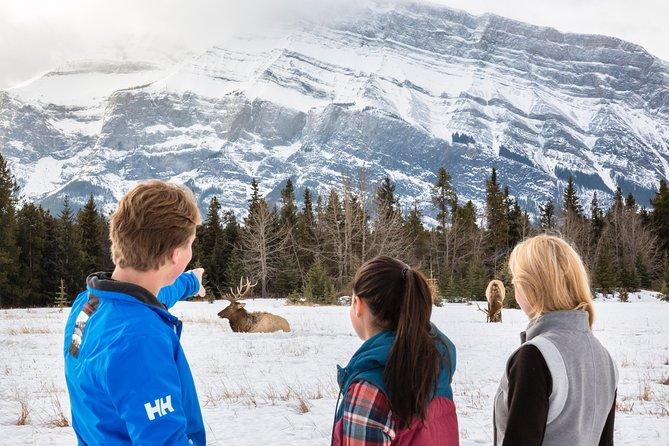 Tour de invierno: Banff y su vida silvestre