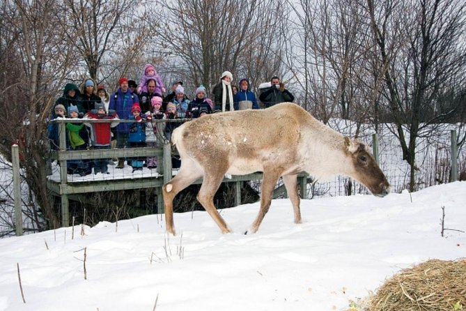 Montreal ZOO, private half day tour