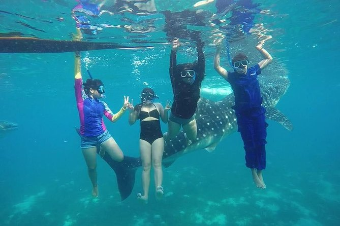 Oslob Whale Shark Snorkeling and Badian Canyoneering Adventure photo 6