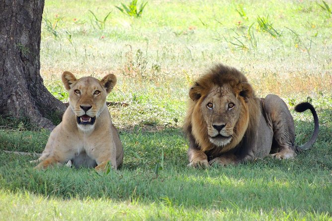 5 Days Tarangire, Serengeti, Ngorongoro & Manyara Camping Safari Tour Tanzania
