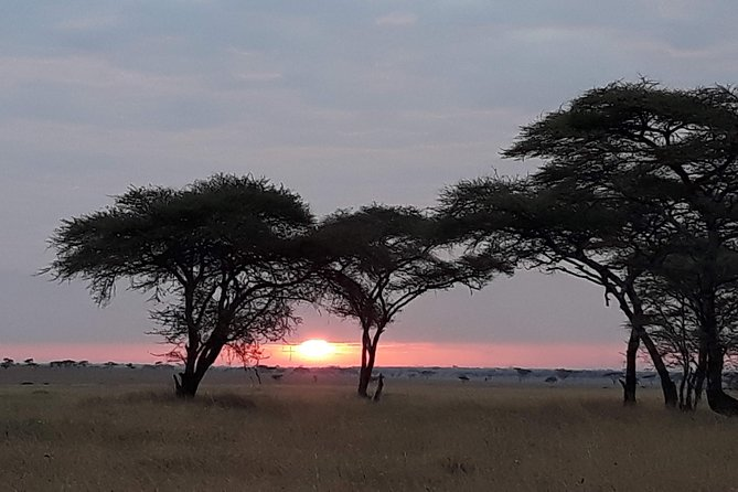 6 Days Tarangire,Serengeti,Ngorongoro &Manyara Budget Lodge Safari Tour Tanzania photo 12