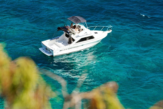 Sea Passion Tenerife Whalewatching and fishing Enjoy of the nature from the sea