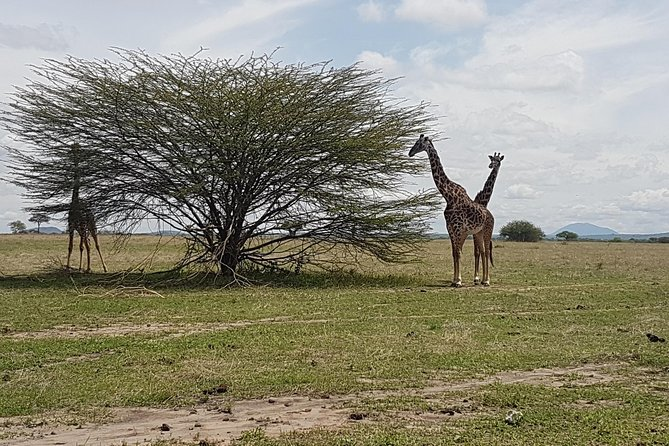 6 Days Tarangire,Serengeti,Ngorongoro &Manyara Budget Lodge Safari Tour Tanzania photo 7