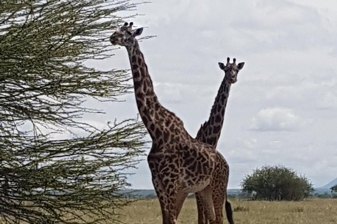 6 Days Tarangire,Serengeti,Ngorongoro &Manyara Budget Lodge Safari Tour Tanzania photo 6