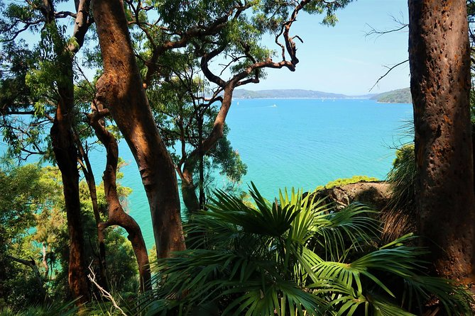 Bush And Beach Day Tour: Ku-Ring-Gai Chase National Park and Palm Beach