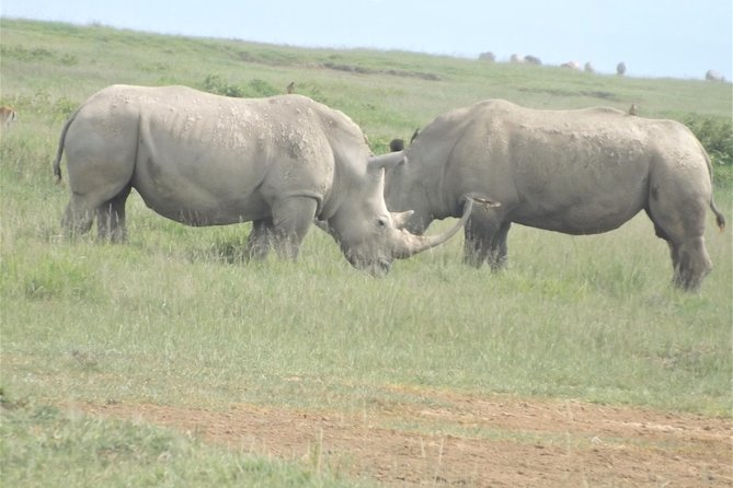 6 Days Masai Mara National Game Reserve Lake Nakuru and Amboseli National Park