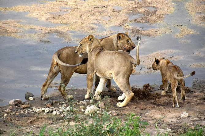 10 Days Perfectly Family Luxury Safari Tour Tanzania photo 8