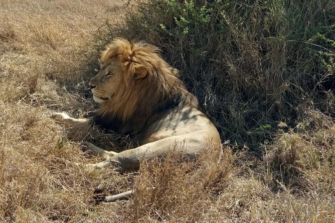 8 Days Tarangire, Serengeti, Ngorongoro & Manyara Mid-range Camping Safari Tour photo 15